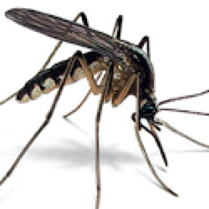 cropped-mosquito.png